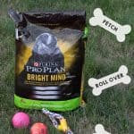 Purina Pro Plan Bright Mind Helps My Dog Remember Her Old Tricks