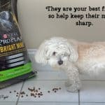 Purina ProPlan Bright Mind Helps My Senior Dog's Mind Sharp