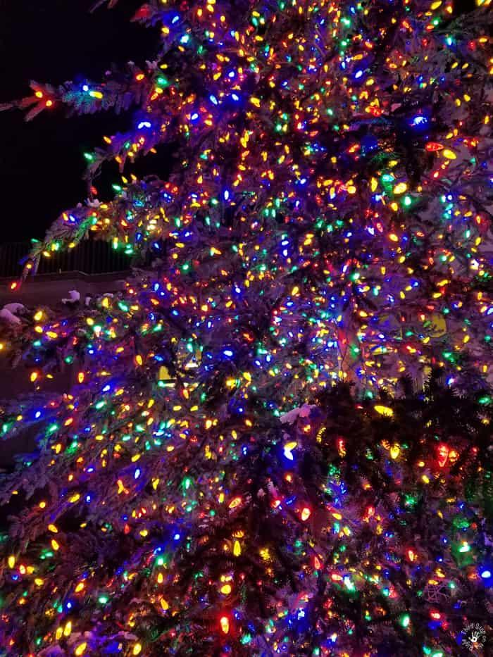 christmaslightsinsnow