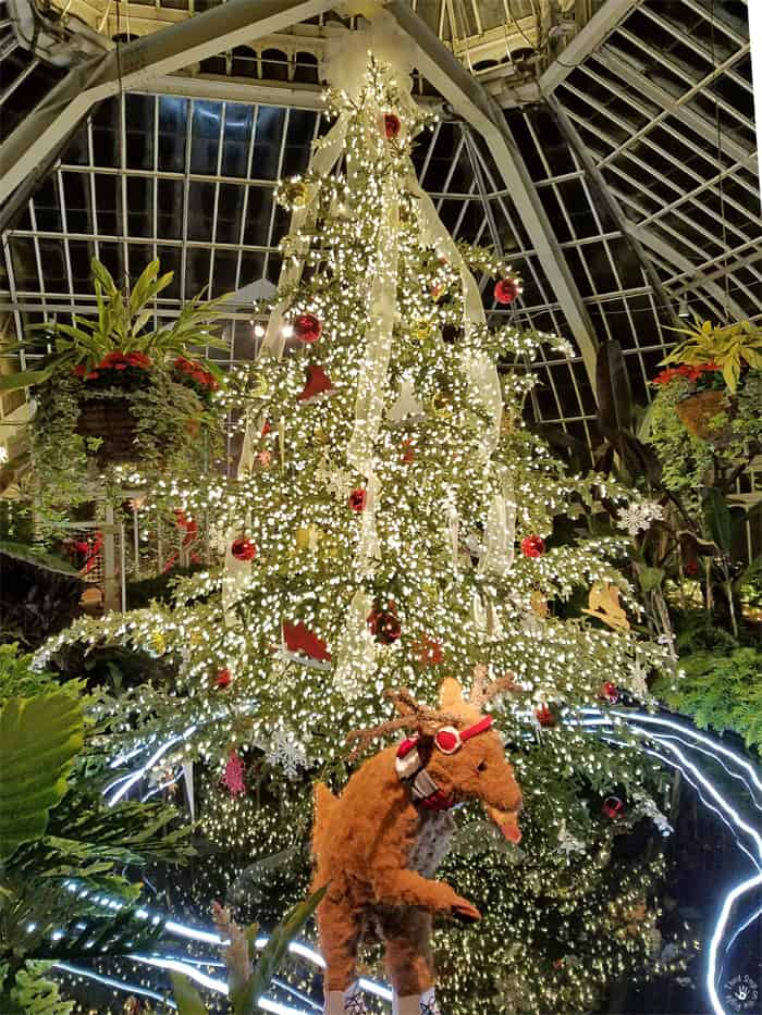 Phipps Conservatory Christmas 2019.Experiencing The Phipps Conservatory Winter Flower Show And