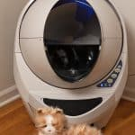 No More Litter Box Scooping!