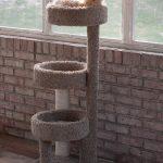 Creating a Cat-Friendly Sunroom