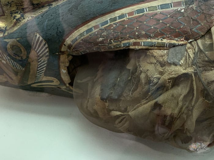 Carnegie Museum Mummy Fingers
