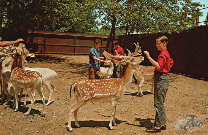 Petting Zoo at Fairyland Forest