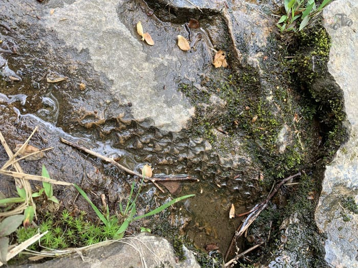 Fossils on the Ferncliff Trail
